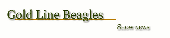 Gold Line Beagles- Show news